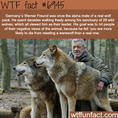 WTF Fun Facts is updated daily with interesting & funny random facts. We post about health, celebs/people, places, animals, history information and much more. New facts all day - every day! Animals And Pets, Funny Animals, Cute Animals, Beautiful Creatures, Animals Beautiful, Of Wolf And Man, Wtf Fun Facts, Love Facts, Random Facts
