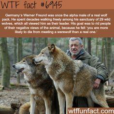 Werner Freund - WTF fun fact