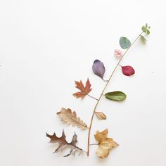 Flower Words, My Flower, Flower Art, Instagram Frame, Pastel Paper, Korean Art, Leaf Art, Abstract Pattern, Pretty Flowers