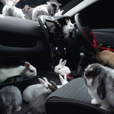 Joey, thanks for the ride but I think the car pool is getting too big for your compact car.