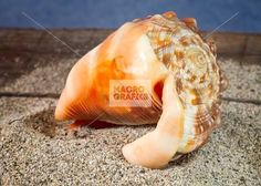 seashell inner part on natural background