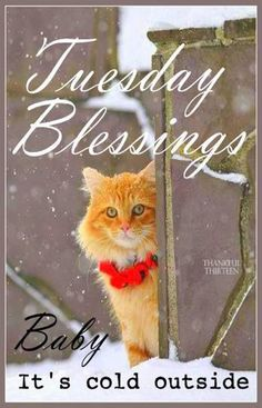 Tuesday Blessings! ♥   That my kitties are all inside and warm with the snow coming down. Bring your animals inside it's too cold out there.