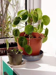Pilea peperomioides - Chinese Monkey plant - houseplant - I want one! It's like an indoor Nasturtium