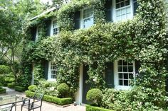 Home covered in Confederate Jasmine