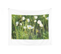 Tender white poppies in the sun by Mariia Kalinichenko. Since the end of spring white poppies are blooming on the coast, so tender and airy! • Also buy this artwork on home decor, apparel, stickers, and more.