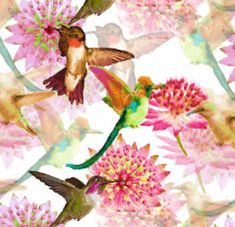 Hummingbirds and Astrantia Watercolor Wrapping Paper Create Yourself, Create Your Own, Astrantia, Hummingbirds, Wrapping, Wraps, Watercolor, Paper, Flowers