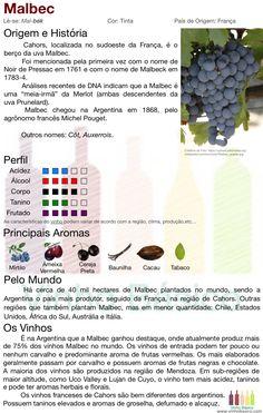 Malbec vinhobasico