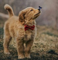 Stunning hand crafted golden retriever accessories and jewelery available at Paws Passion Shop! Represent your golden retriever pup with our merchandise! Cute Baby Dogs, Cute Dogs And Puppies, Puppies Tips, Doggies, Small Puppies, Pet Dogs, Cute Animals Puppies, Free Puppies, Cutest Dogs