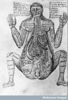 This is a 1400s depiction of a pregnant person, for medical practitioners I suspect