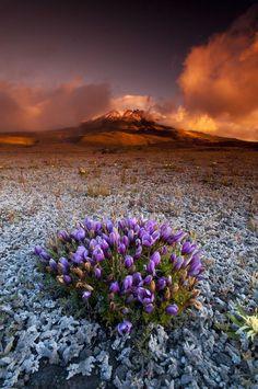 """Cotopaxi Sunset"" Cotopaxi National Park, Ecuador, by fernandosalas, on 500px."