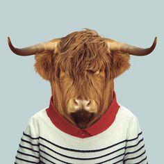 Zoo Portraits - Scottish Cow  Fun, beautiful art and a unique gift idea!
