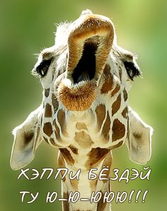 I wonder if this giraffe is yawning,about to take a bite,or maybe talking to a different giraffe.This giraffe is being funny.And I just thought that maybe this giraffe is laughing,but I do not know. Animals And Pets, Baby Animals, Funny Animals, Cute Animals, Wild Animals, Baby Giraffes, Happy Birthday Giraffe, Happy Birthday Mom, Funny Happy Birthdays