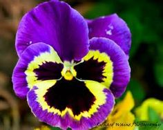 Purple and Yellow flowers - Bing Images
