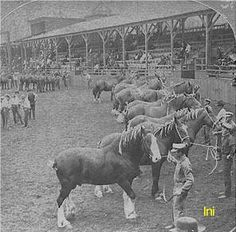 1904 St. Louis Worlds Fair  Belgian Horse Shows