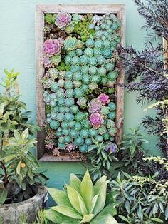 Vertical garden with succulents.