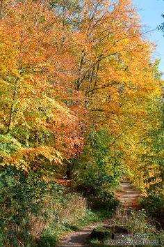 Trees in the Schwentinetal valley near Kiel