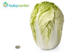 28 Semanas  Esta semana bebito pesa lo mismo que una col china, un poco más de 1 kg. y mide un poco más de 37,5 cm., desde la parte de arriba de la cabecita hasta los talones. #desarrollofetal #embarazo