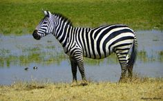 PHOTO GALLERY: Serengeti National Park Wildlife Safari