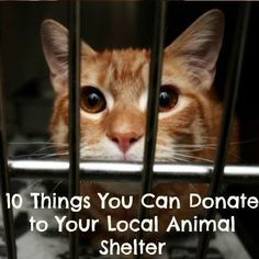 10 Things You Can Donate to Your Local Animal Shelter: http://untileverycage.com/2013/09/02/10-things-you-can-donate-to-your-local-animal-shelter/