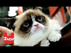 Grumpy Cat: Tarder Sauce is set to release a new book and star in a movie - YouTube