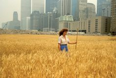 Environmental artist Agnes Denes's iconic 1982 work, Wheatfield, is revived in London in 2009.