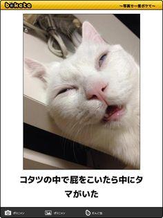 コタツの中で屁をこいたら中にタマがいた Cute Baby Animals, Animals And Pets, Funny Animals, Funny Cute Cats, Haha Funny, Japanese Funny, Happy Smile, Cat Memes, Really Funny