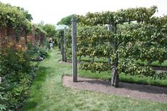 Vegetable And Herb Garden Layout | ... Apple Trees, Vegetable and Fruit Garden, Chicago Botanic Garden