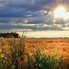 There's no place like Kansas. Shared by Deb Hagen via Facebook. #noplacelikeks #ksbucketlist #kansas #midwest #heartland #plains #prairie #sunset #wheat #wildflower #landscape #harvest #rural #country