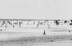 Sebastio Salgado, Famine of Sahel, Faguibin lake is dry, Lere, Mali, 1985