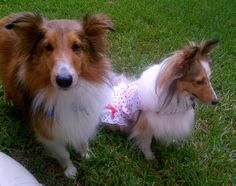Lucky & Amy; Lucky is looking for his forever home.