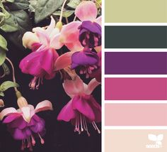 today's inspiration image for { fuchsia palette } is by . i am smitten with Hanging Fuchsia (such a Dr Seuss flower, right?) + love the modern edge of these hues . thank you Lisa for sharing another wonderfully inspiring photo in Colour Pallete, Colour Schemes, Color Combos, Color Patterns, Color Palettes, Design Seeds, Rose Fushia, Magenta, Couleur Fuchsia