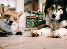 Little cuties - juniper the fox Instagram