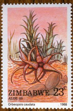 Succulents on Stamps: Orbea caudata, Zimbabwe, 1988 at WorldOfSucculents.com