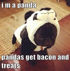 I'm a panda. Pandas get bacon and treats!