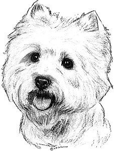 How to Draw a Westie Highland Terrier