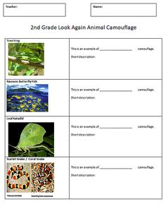Camouflage Research Handout for Kids