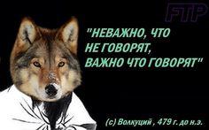 Stupid Memes, Funny Memes, Russian Jokes, Fun Live, Creepypasta Characters, Wolf Quotes, Man Humor, Animal Memes, Lol