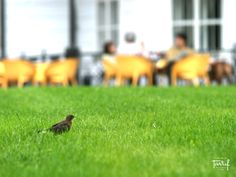 In the park II. (the Park Hotel Tartuf/the Mannor-house Pusty Chotar)