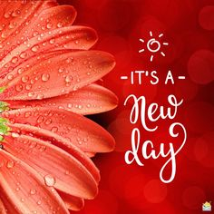 Good morning image with red flower on red background and a morning quote. Flirty Good Morning Quotes, Positive Good Morning Quotes, Good Morning Happy Sunday, Good Morning Ladies, Good Morning Inspirational Quotes, Have A Happy Day, Good Morning Messages, Good Morning Greetings, Good Morning Good Night