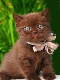 Очаровательный котенок с бантиком - анимация на телефон №1239332