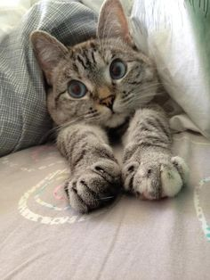 Sweet cat.