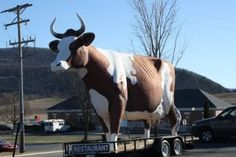 This giant cow stood next to Ayrshire Dairy in between Kersey and St Marys Pa, where I grew up.  I loved going to see the big cow.