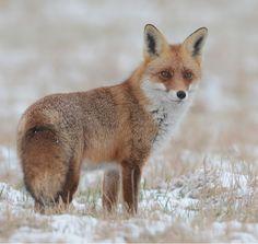 beautiful-wildlife:  In CrayonbyHerbert Henderkes