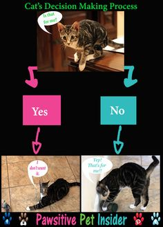 Cat's Decision Making Process   Does your cat do this?