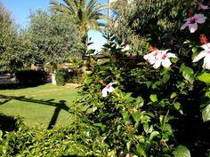 Un buon pomeriggio dai nostri giardini!