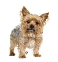 Over 150 Different Dog Breed Profiles