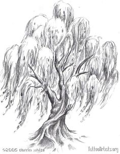 sexy Tree Tattoo Designs For Women | Pin Weeping Willow Tree ...