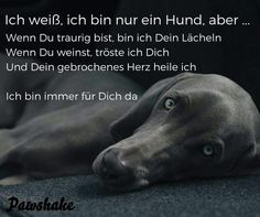ein Bild für's Herz 'was du hast.jpg'- Eine von 14473 Dateien in de… a picture for & # s heart & # what you have.jpg – One of 14473 files in the category & # sayings & # on FUNPOT. Dog Quotes, Words Quotes, True Friends, Best Friends, Socializing Dogs, Weimaraner, Dog Love, Dog Training, Sayings