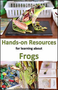 Hands-on Resources for learning about Frogs