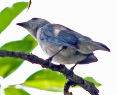 Hay un pájaro azul en mi corazón que quiere salir pero soy duro con él, le digo quédate ahí dentro, no voy a permitir que nadie te vea. Charles Bukowski
